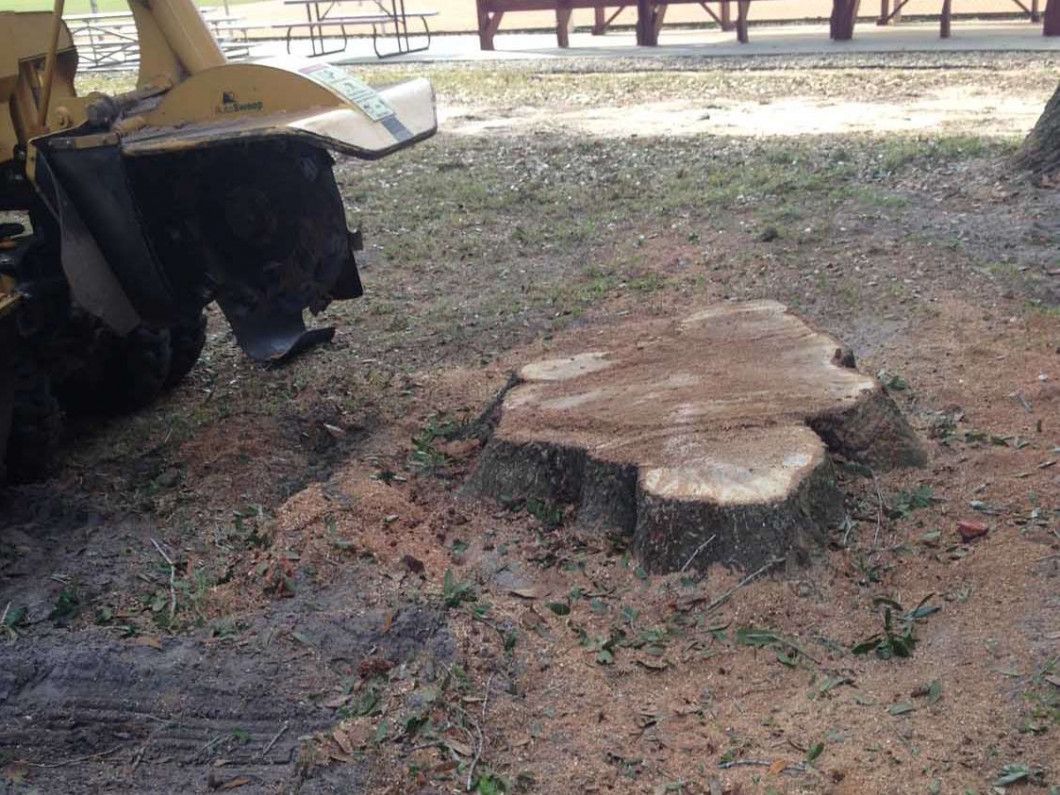 We make tree stump removal as easy as 1... 2... 3...